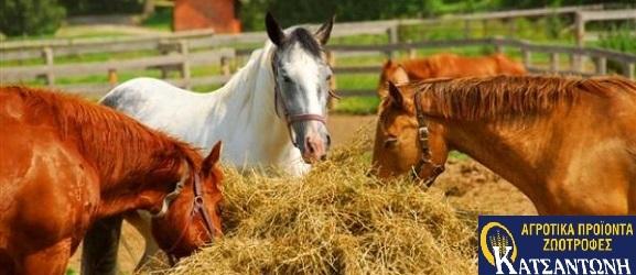 Κατσαντώνη-Τροφές-για-άλογα