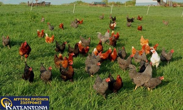 Πτηνοτροφία-Κατσαντώνη-Παροχή-ζωοτροφών