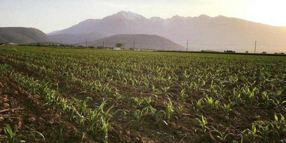 Κατσαντώνη-Αγροτικά-προϊόντα