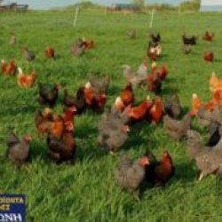 Πτηνοτροφία-Κατσαντώνη-Παροχή-ζωοτροφών-300x180