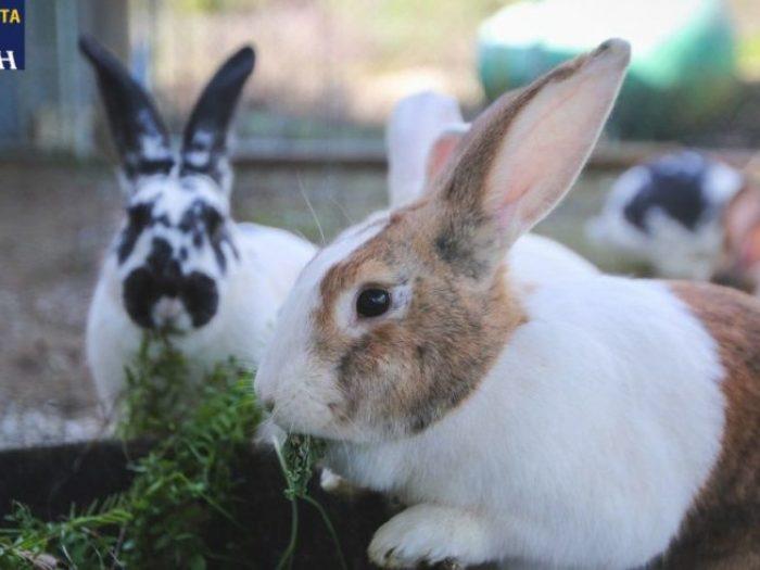 Ζωοτροφές-Κουνελιών-Κατσαντώνη