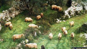 Κατσαντωνη-ζωοτροφες-αιγοπροβάτων